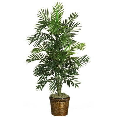 Areca-Palm-Tree-houseplant