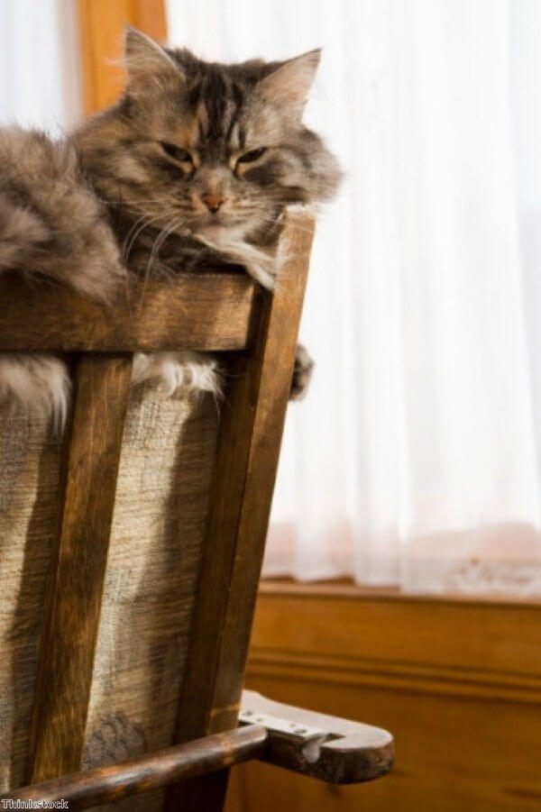 Deter Cats From your Furniture mod