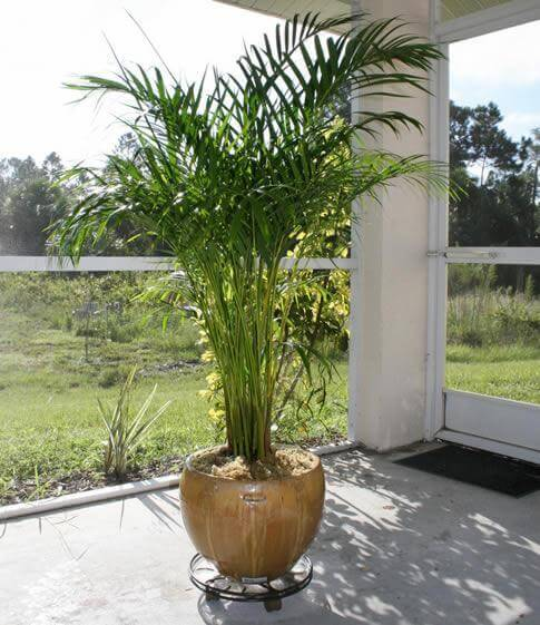 Indoor Palm Plant mod