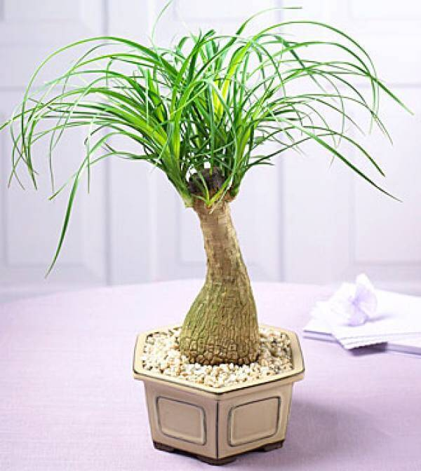 12 Indoor Plants You Can\'t Kill – Apartment Geeks