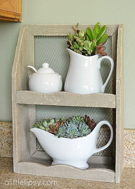 Succulents in a white ceramic pitcher mod