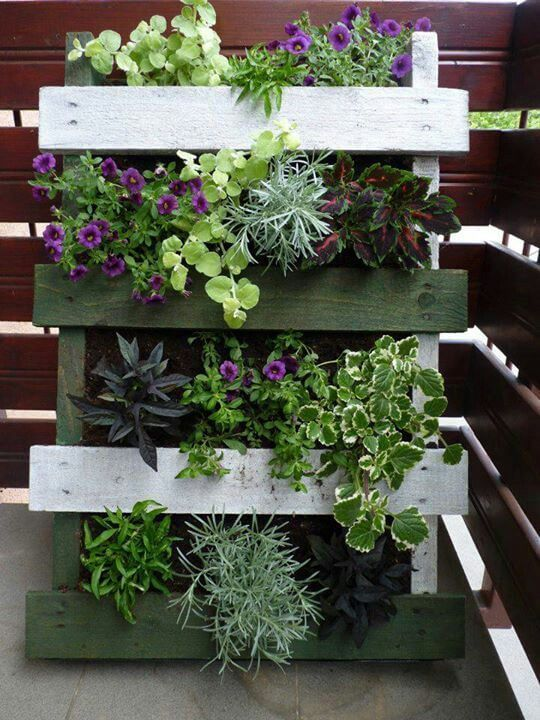 10 magnificent gardens you can have on your balcony for Balcony vertical garden